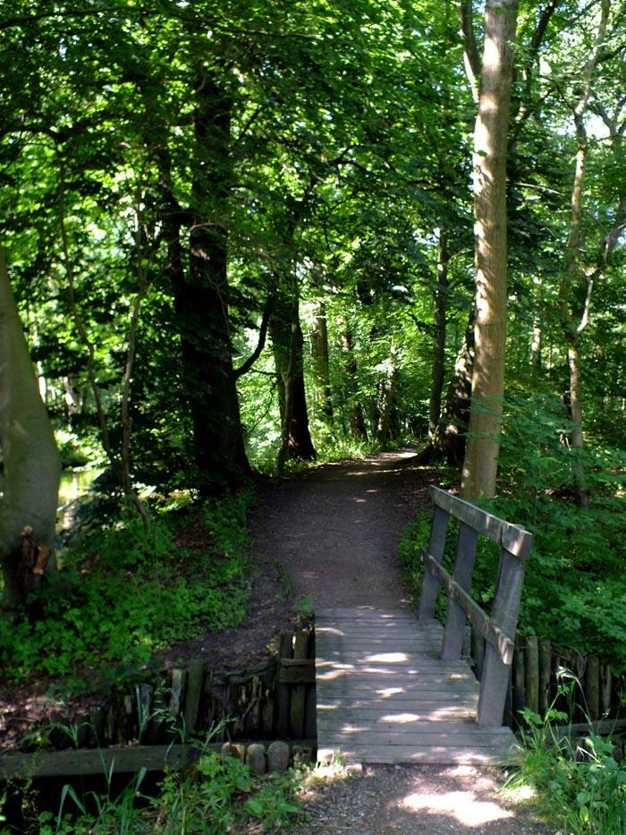 Foto van bruggetje en pad tussen de bomen