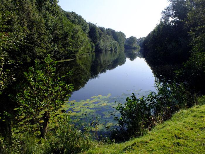 Foto van waterplas tussen de bomen