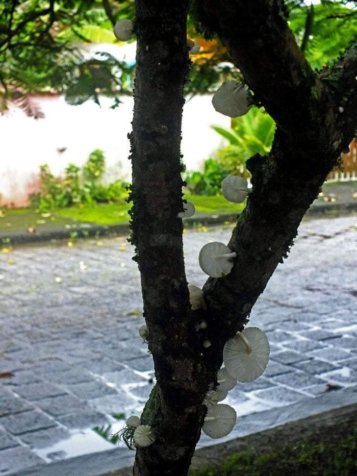 Foto van boom met paddestoelen en straat op achtergrond