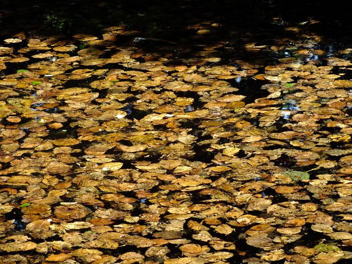 Foto van herfstbladeren op het water