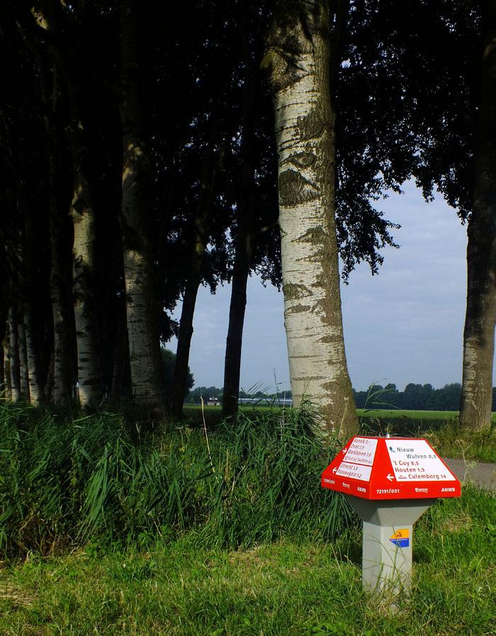 Foto van ANWB-paddestoel onder de bomen