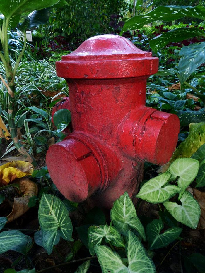 Foto van rode brandkraan tussen planten