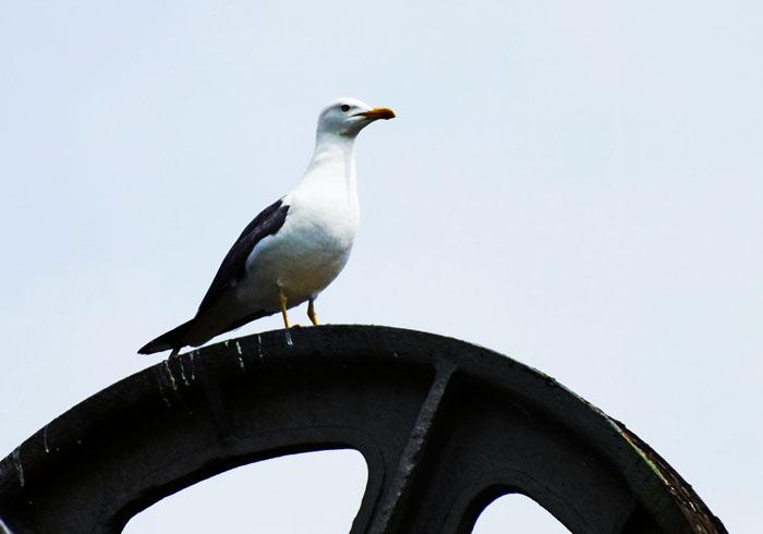 Foto van meeuw op ophaalbrug