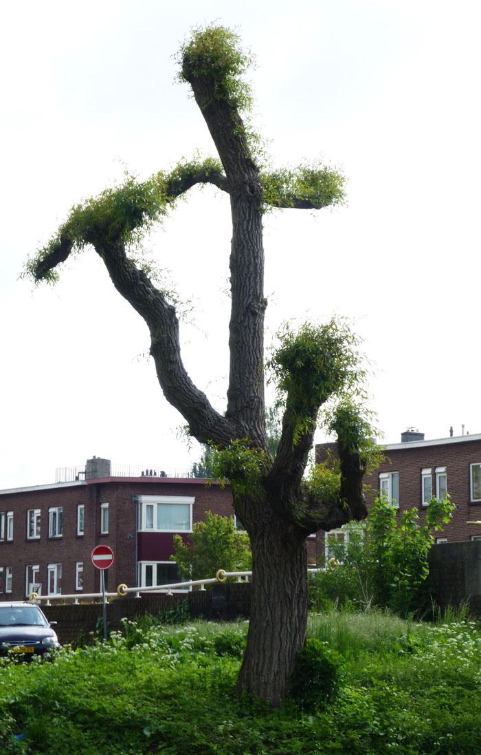 Foto van grillige boom