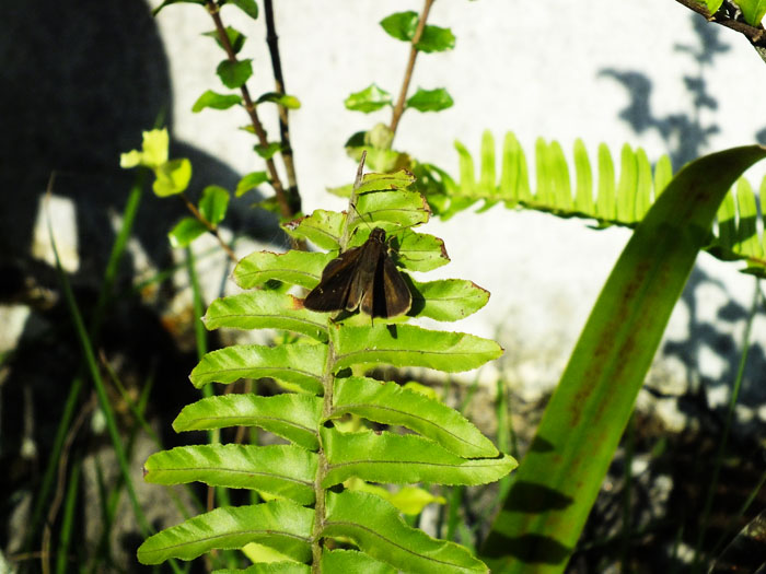 Foto van bruine mot op groene plant